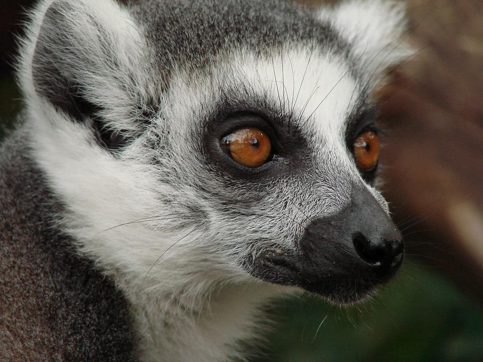 Que voir à Madagascar ?