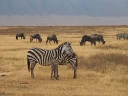 Tout sur le safari